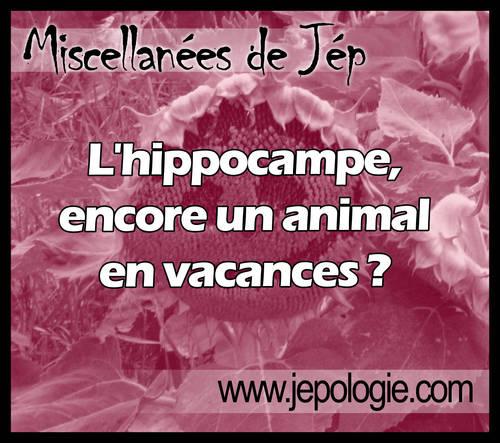 L hippocampe encore un animal en vacances.jpg