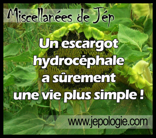 Un escargot hydrocéphale à surement une vie plus simple.jpg