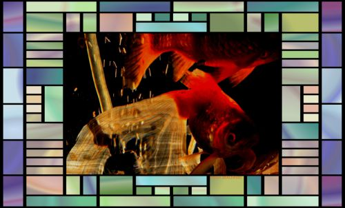 poissons rouge dans bocal  magique  2