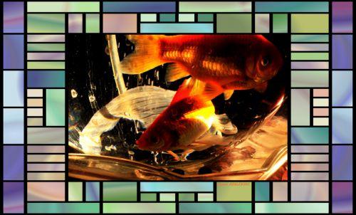 poissons rouge dans bocal  magique  3