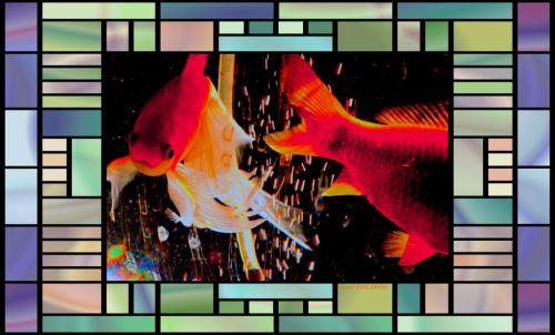 poissons rouge dans bocal  magique  4
