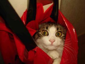 acheter un chat dans un sac.jpg