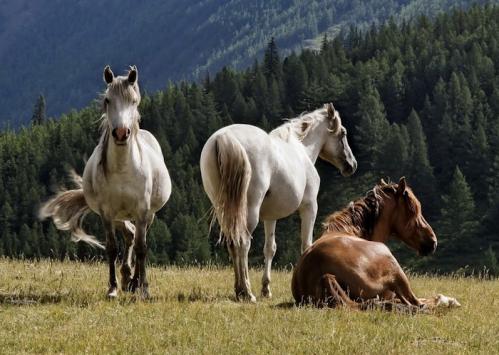 chevaux au pré.png