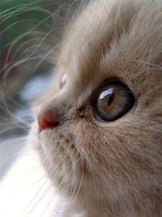 profil de chat mignon.jpg