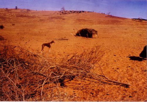 Campement d'Iklan en zone dunaire