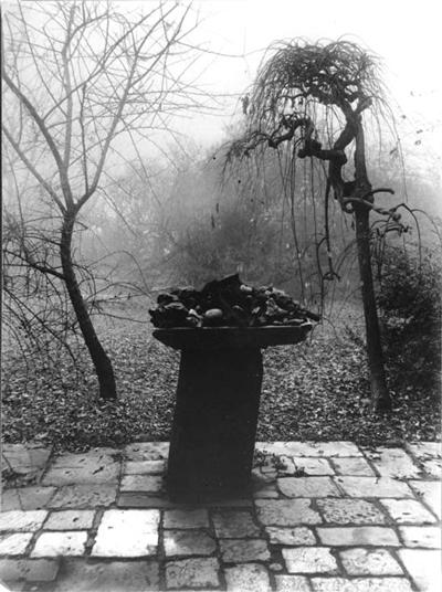 Photo de Josef Sudek (Jardin sous brume).jpg