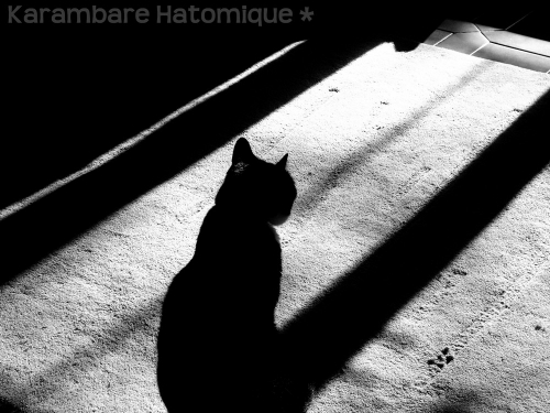 Photo de Kaaram Hat (Chat dans l'ombre 2009).jpg