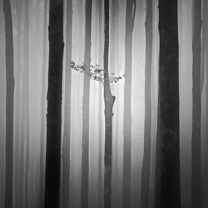 Photo de Hengki Koentjoro (Trees).jpg