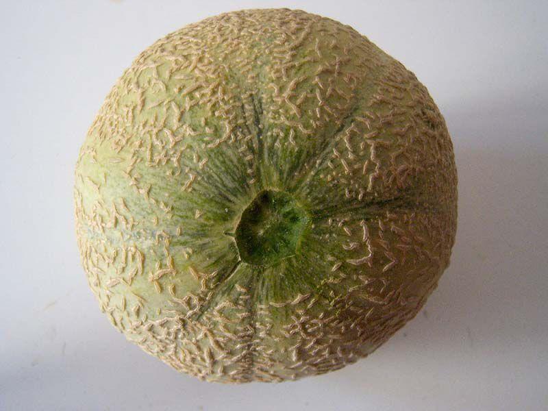 Le melon potager comtois - Quand cueillir un melon ...