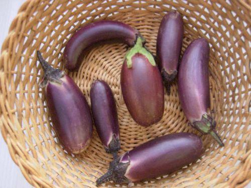 1er récolte d'aubergine
