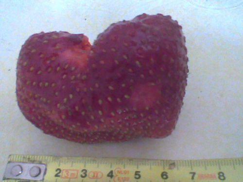 fraise maxim 2010 vers Pontarlier (haut doubs) 25