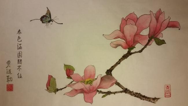 Papillon, fleurs de magnolia