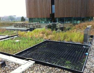 plant-e green roof.jpg