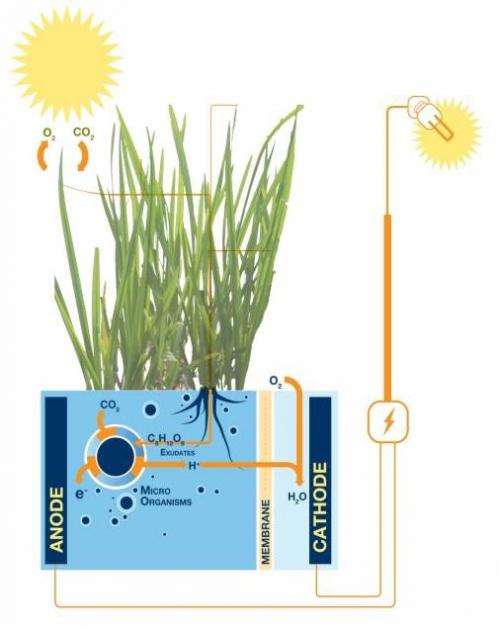 plant-e image.jpg