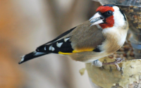 BOUDLEL-Oiseau