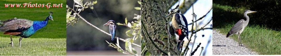 oiseaux, animaux, paysages, monuments,alsace