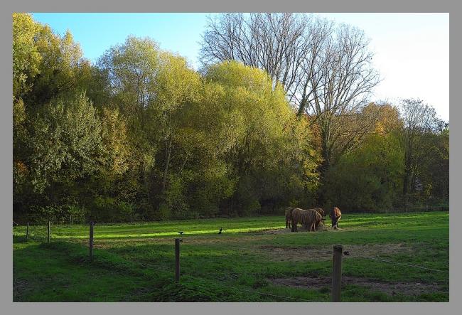 151107gr zoo (2).jpg