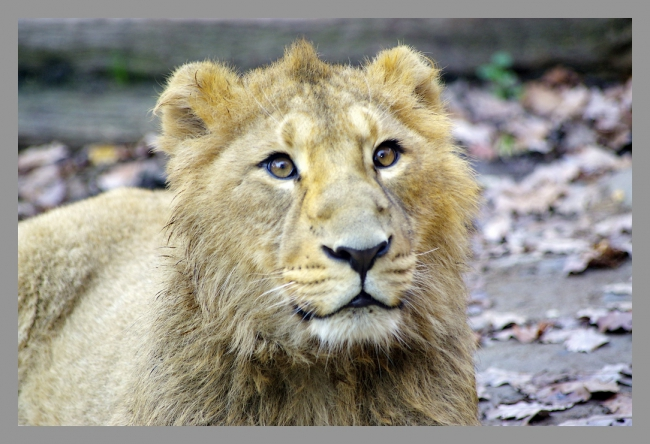 151107gr zoo (5).jpg