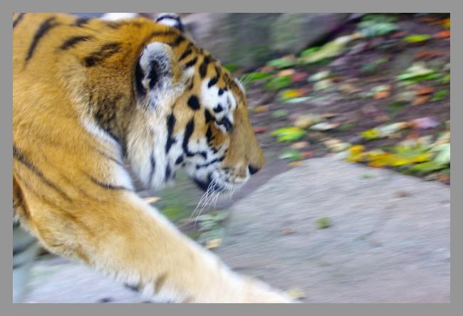 151107gr zoo (8).jpg