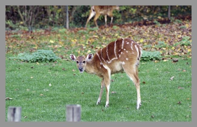 151107gr zoo (9).jpg