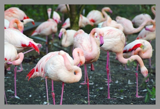 151107gr zoo (14).jpg