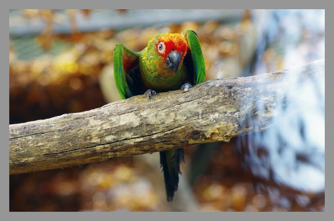 151107gr zoo (22).jpg