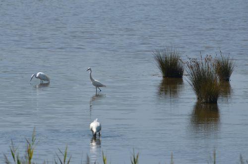 Parc Ornithologique Le Teich près d'Arcachon