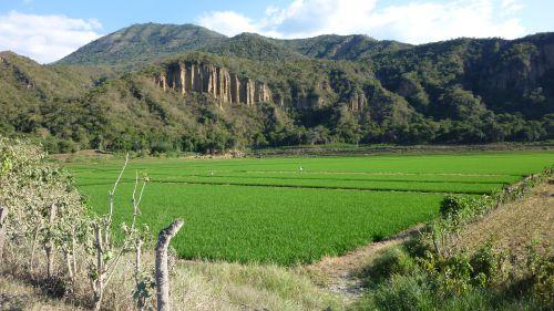 Des rizieres verdoyantes apres San Igniacio