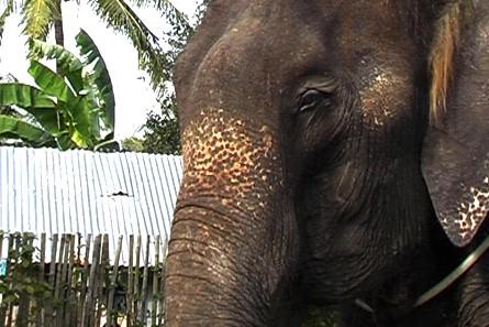 elephant-thailande-03.jpg