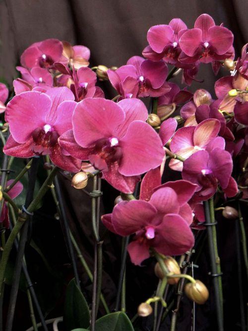 Orchidée 12