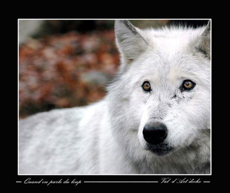 Quand on parle du loup
