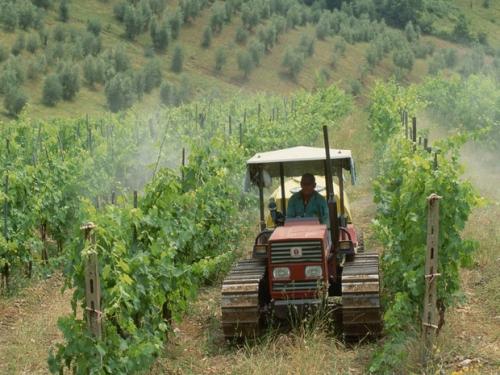 epandage-de-pesticides-sur-des-vignes_620x465.jpg