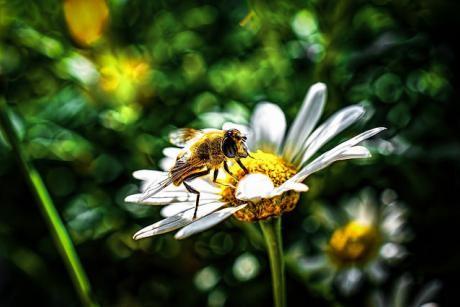 abeilles (2).jpg