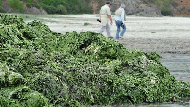 algues-vertes-eaux-et-rivieres-pointe-letat.jpg