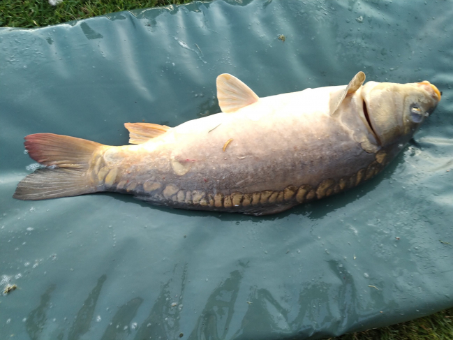 Pêche de Eddy, 6.2 kg 13 juillet 2020