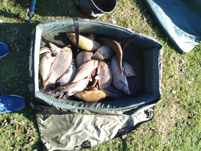 17 carpes dont 1 de 3.6 kg et 11 kg de poissons divers, Eddy, 30 juillet 2020