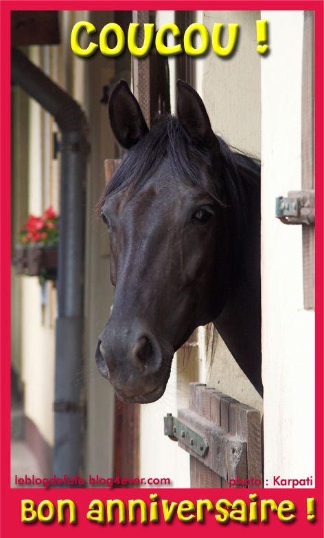 image cheval bon anniversaire