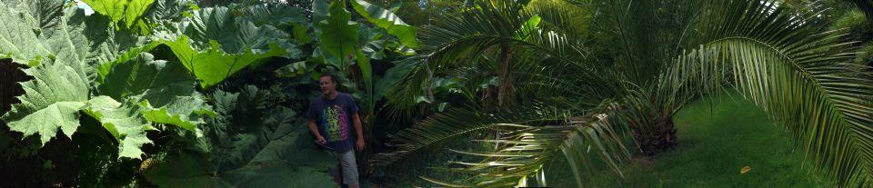 Palmiers dans la beauce