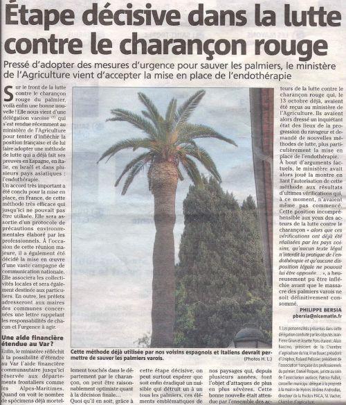 alerte au charencon palmiers menac s conseils pour cr er un jardin exotique sous nos climats. Black Bedroom Furniture Sets. Home Design Ideas