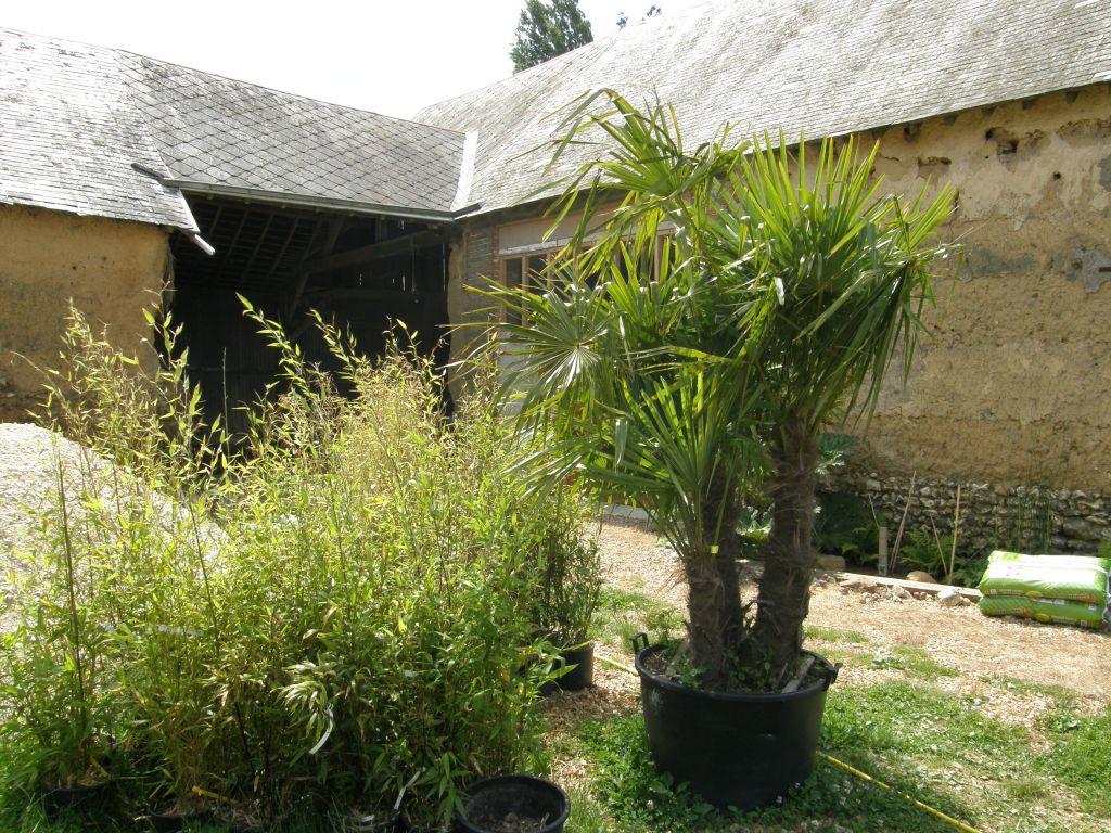 Photo Petit Jardin Exotique la création du jardin exotique pas à pas - conseils pour