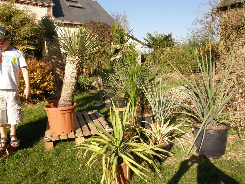 2013 les nouvelles plantes exotiques conseils pour cr er un jardin exotique sous nos climats. Black Bedroom Furniture Sets. Home Design Ideas