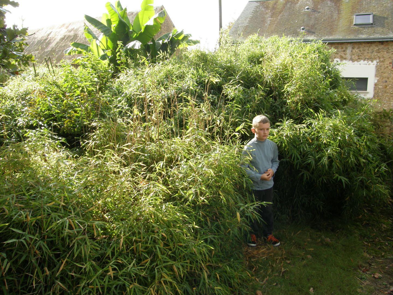 Octobre 2014 conseils pour cr er un jardin exotique sous - Creer un jardin exotique sous nos climats ...