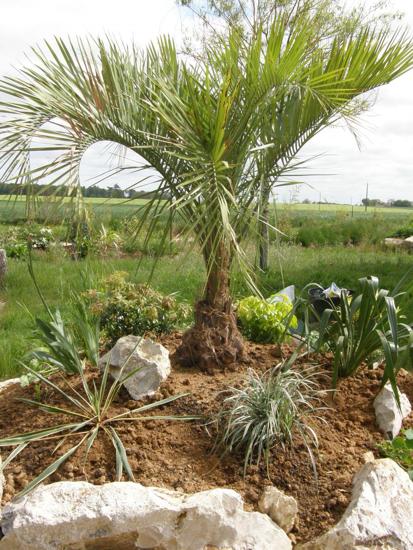 yucca bright edge conseils pour cr er un jardin exotique sous nos climats. Black Bedroom Furniture Sets. Home Design Ideas