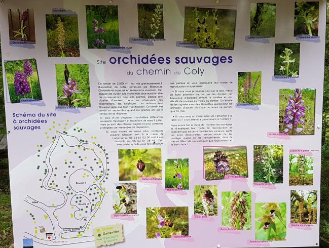 Site des Orchidées