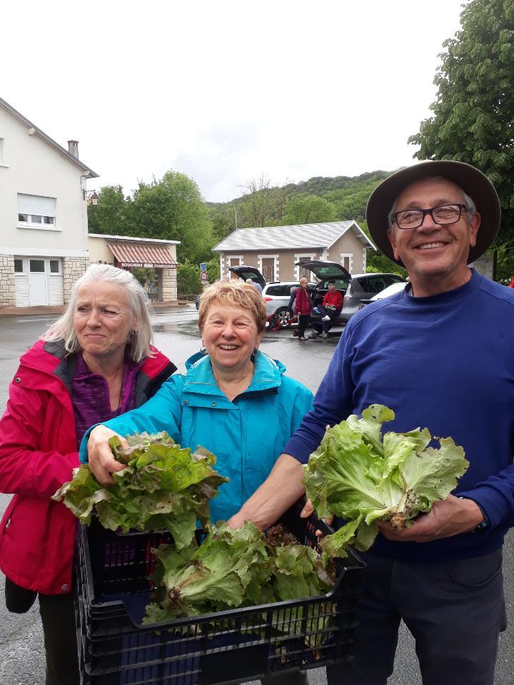 Distribution de salades