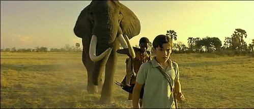 maître éléphants.jpg