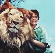 the-lion.jpg