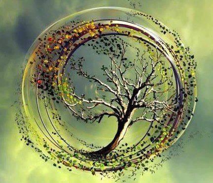 arbre du temps.jpg