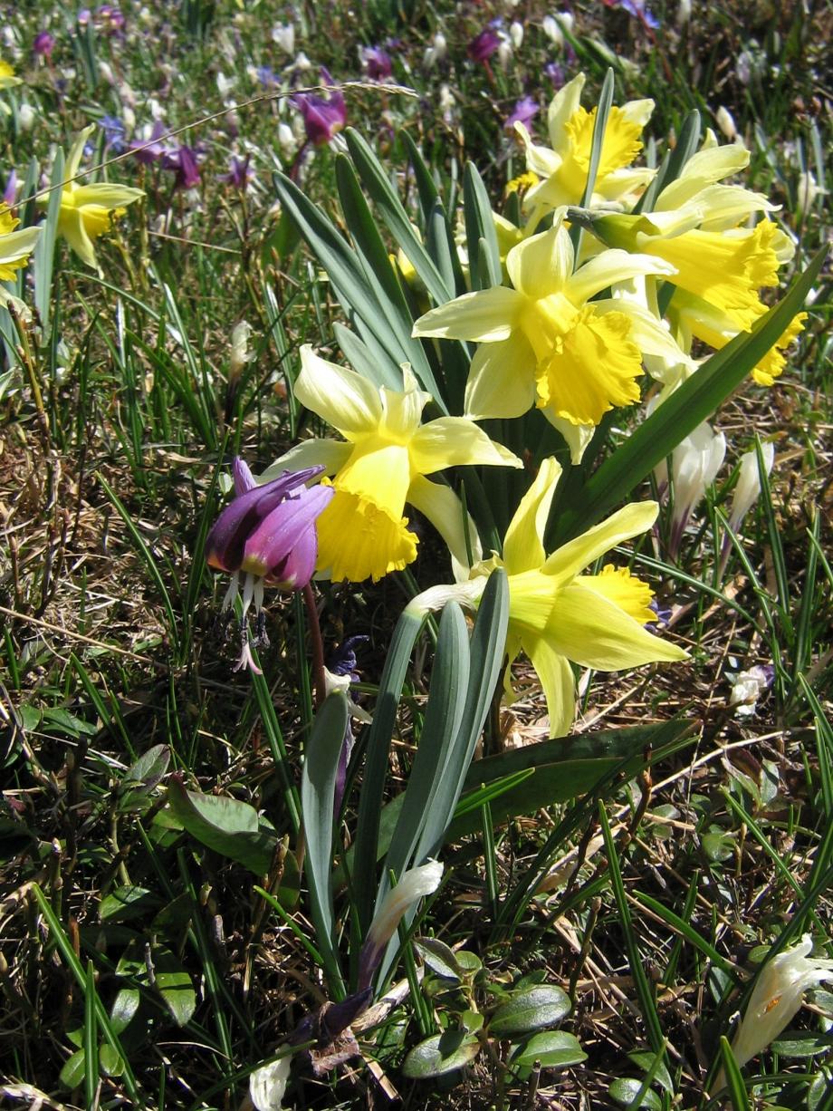 fleurs Font'Urles 2008 026.jpg