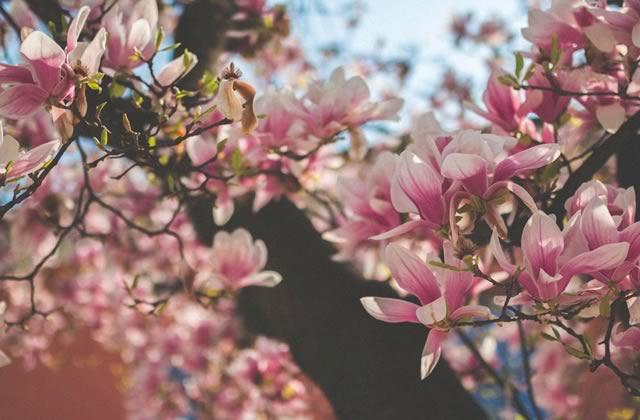celebrer-printemps.jpg